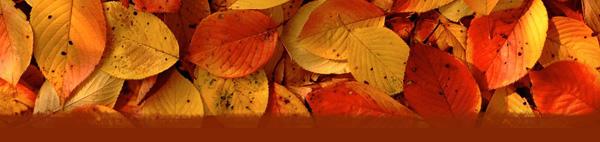 Fall and Autumn